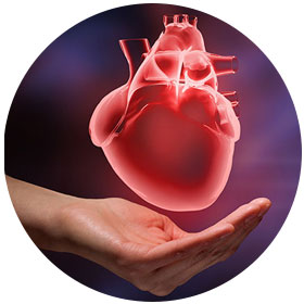 Cardiac Check Up Package - Center Visit